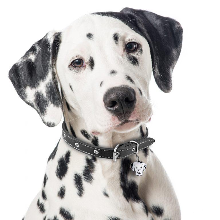 Dalmatiner hundetegn