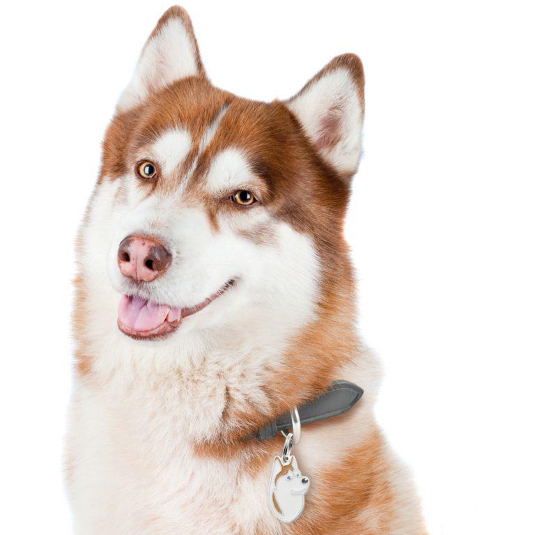 Husky hundetegn