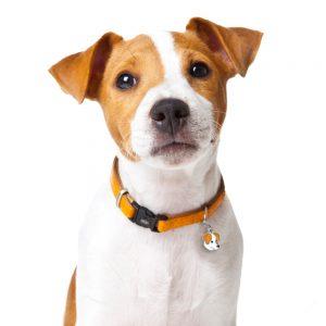 Jack Russell hundetegn