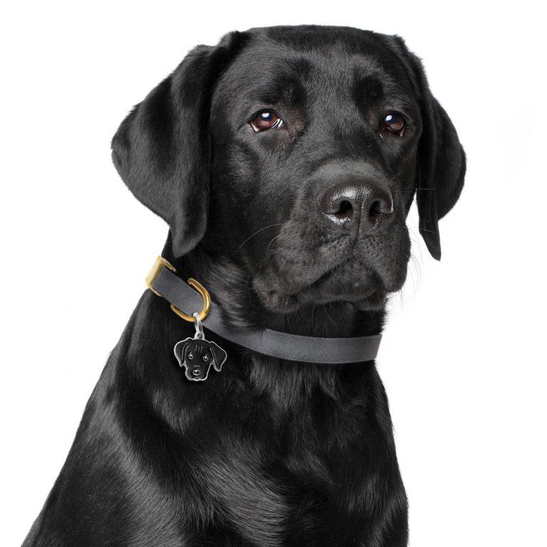 Labrador hundetegn