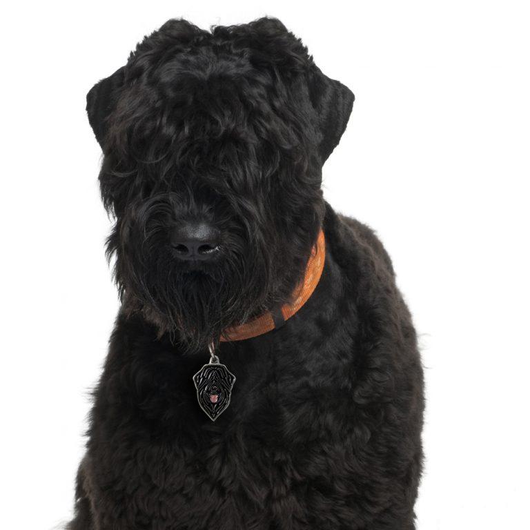 Russisk Terrier hundetegn