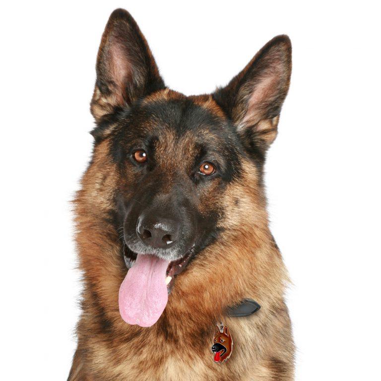 Schæferhund hundetegn