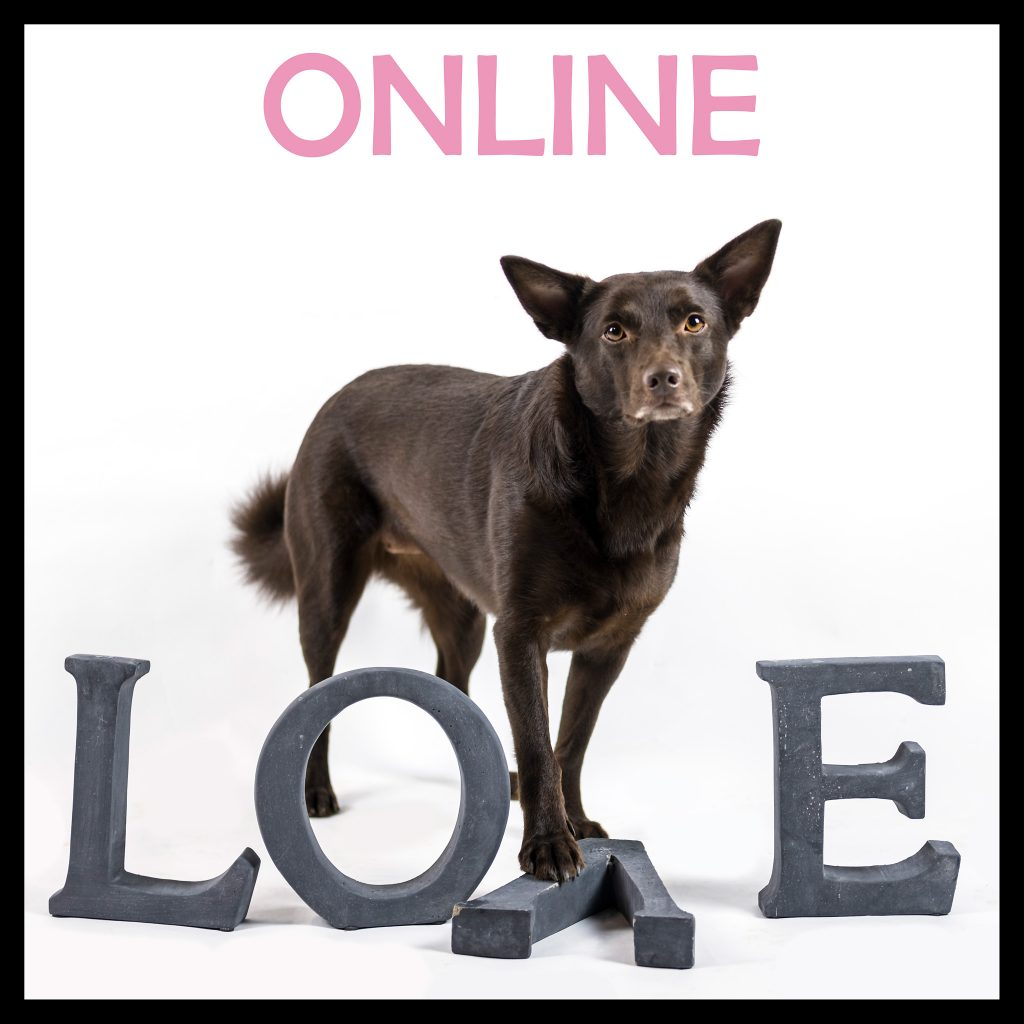 hundkurs onlinekurs