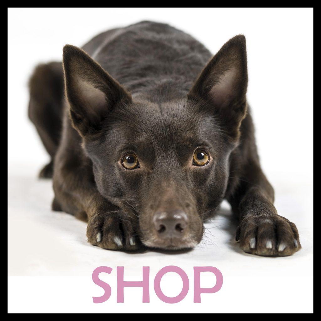 hundkurs hundprylar onlinekurs