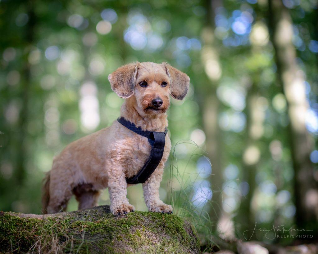Dog parkour kul för din hund