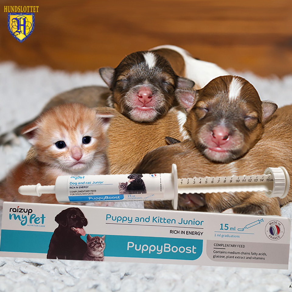 Puppyboost Raizup pet Hundslottet