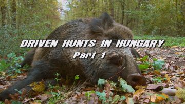 Driven-Hunts-in-Hungary—Part-1