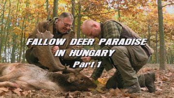 Fallow-Deer-Paradise-in-Hungary—Part-1