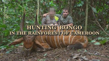 Hunting-Bongo-in-the-Rainforest-of-Cameroon