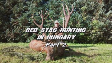 Red-Stag-Hunting-in-Hungary—Part-2