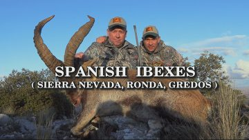 Spanish-Ibexes-Sierra-Nevada-Ronda-Gredos
