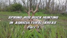 Spring-Roe-Buck-Hunting-in-Agricultural-Areas—Part-1