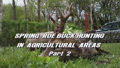 Spring-Roe-Buck-Hunting-in-Agricultural-Areas—Part-2