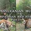 Transylvanian-Hunts-Carpathian-Red-Stags