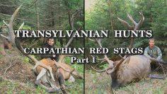 Transylvanian-Hunts-Carpathian-Red-Stags