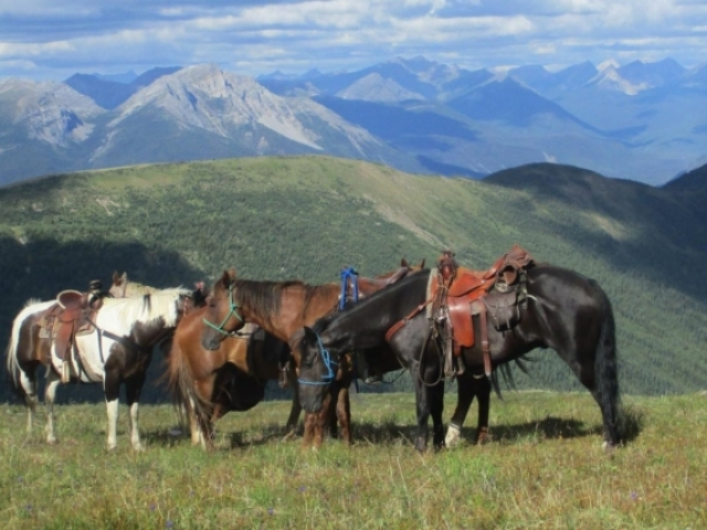 Four horses having a break in the mountains