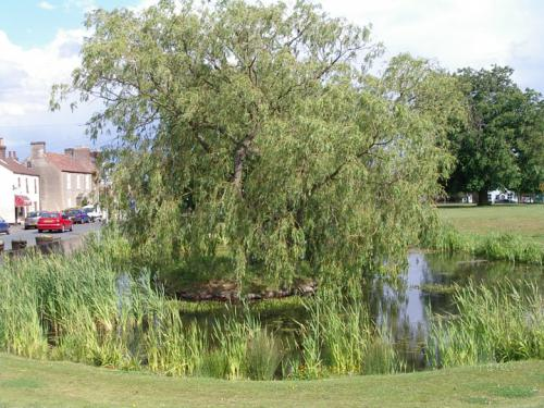 The Pond on the Green