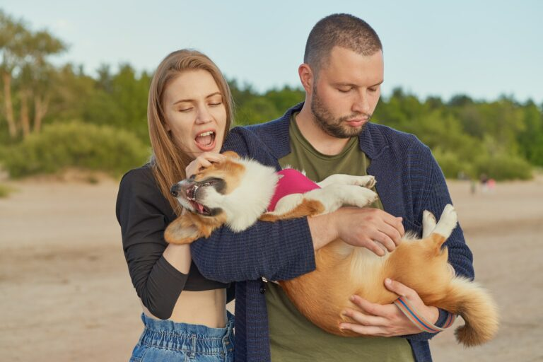 Young happy couple of man and woman with corgi dog, beautiful female biting ears of puppy