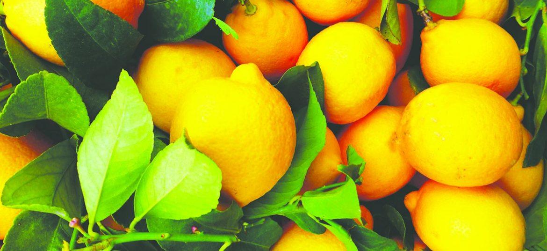 Lemonade med mynte