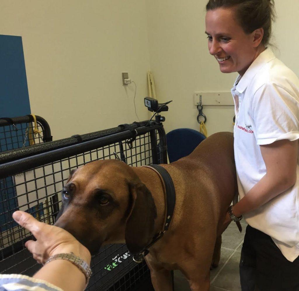 Seniorhund til behandling hos hundefys, foto: nordhund.dk