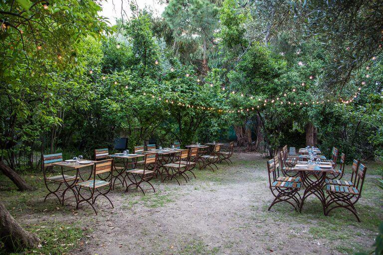 cenas de verano con encanto en el olivar de Castillejo en Madrid