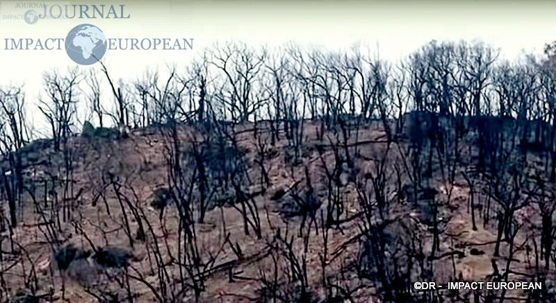 1La faune et la flore de l'Australie dévastées par les incendies