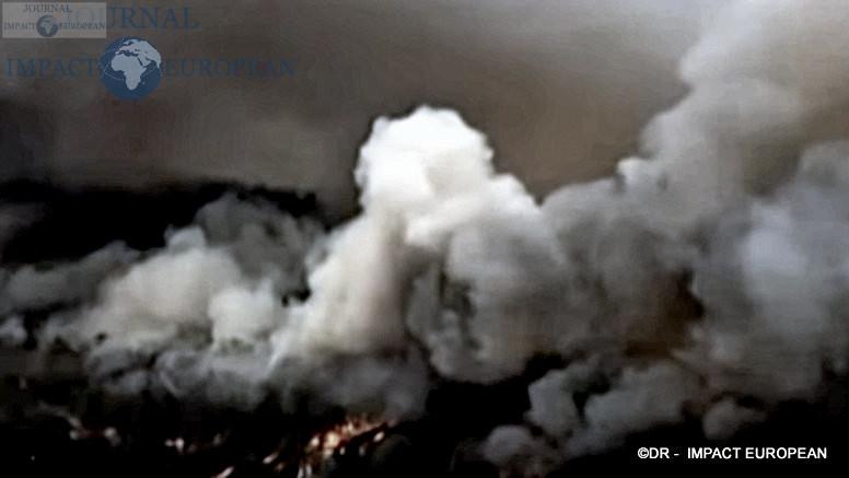 3La faune et la flore de l'Australie dévastées par les incendies