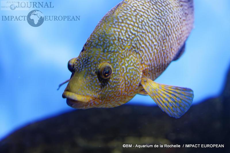 aquarium la rochelle 02