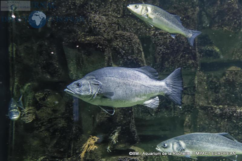 aquarium la rochelle 15