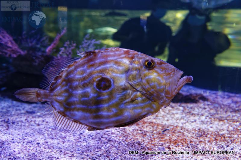 aquarium la rochelle 21