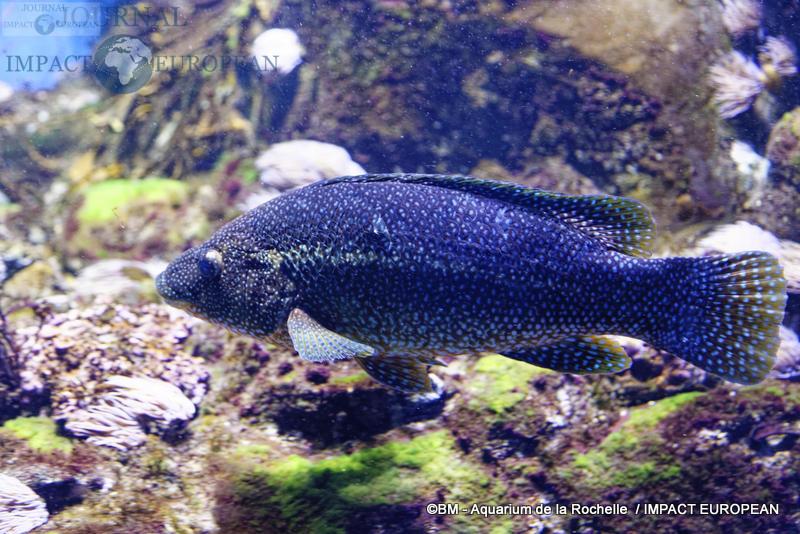 aquarium la rochelle 23
