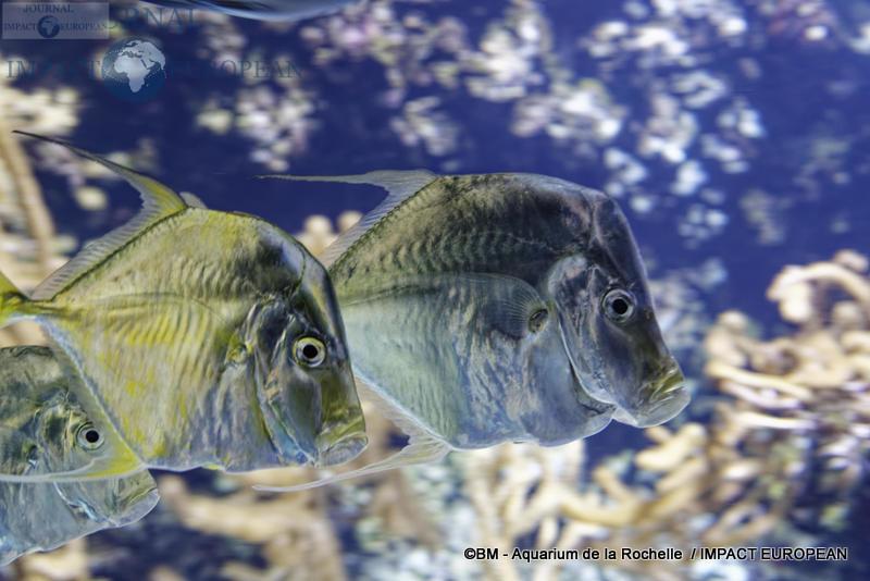 aquarium la rochelle 27