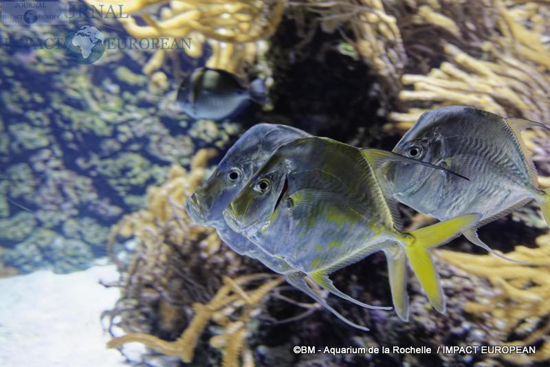 aquarium la rochelle 28