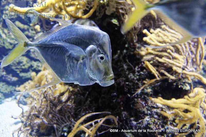 aquarium la rochelle 30