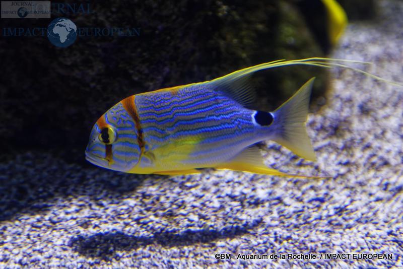 aquarium la rochelle 32