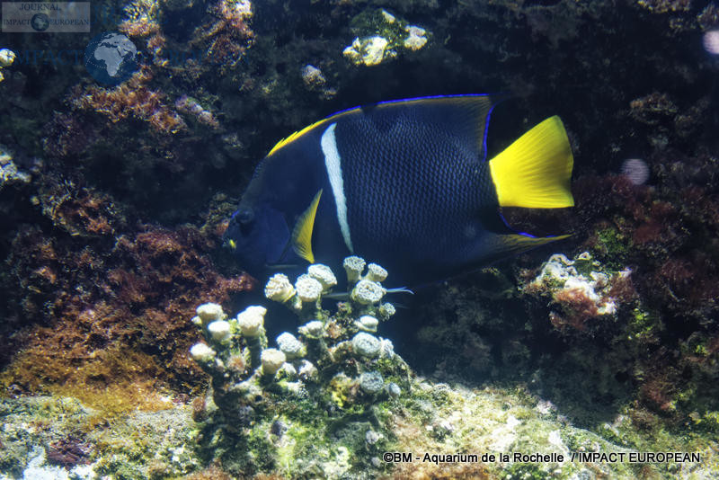aquarium la rochelle 34