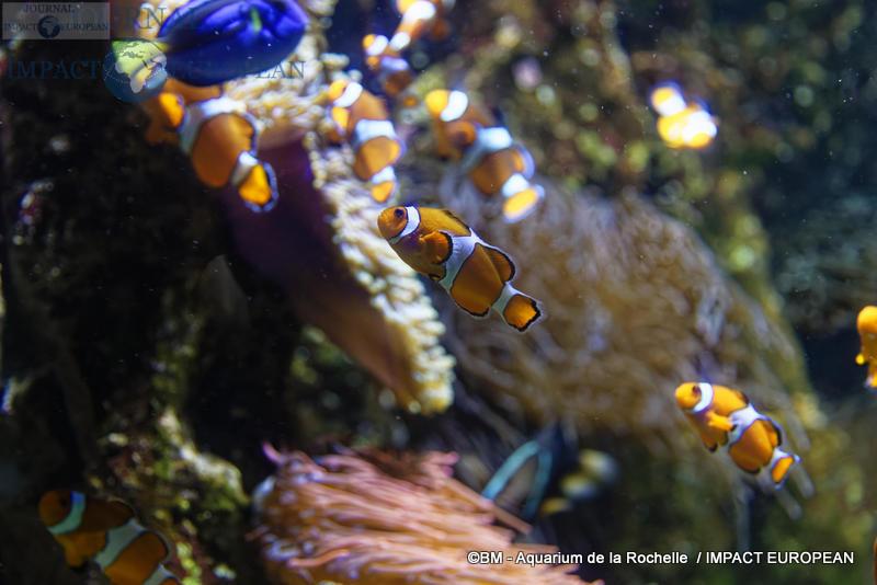 aquarium la rochelle 40