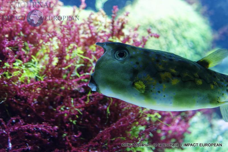 aquarium la rochelle 43