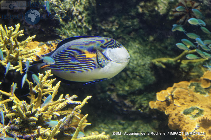 aquarium la rochelle 46