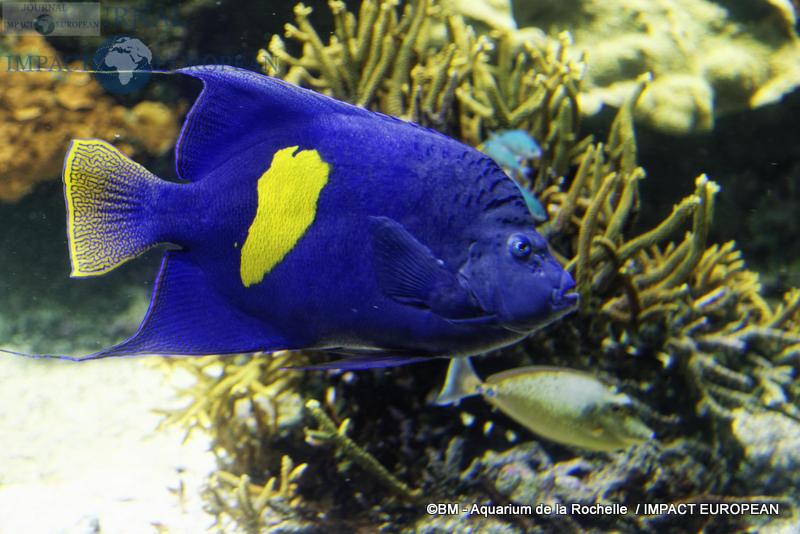 aquarium la rochelle 49