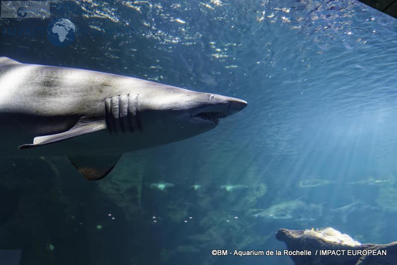 aquarium la rochelle 58
