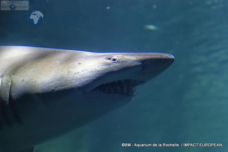 aquarium la rochelle 61