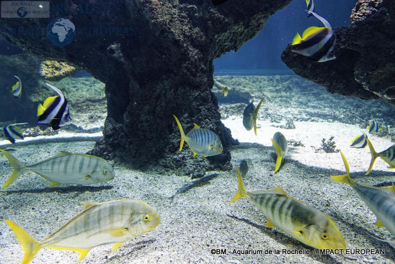 aquarium la rochelle 64