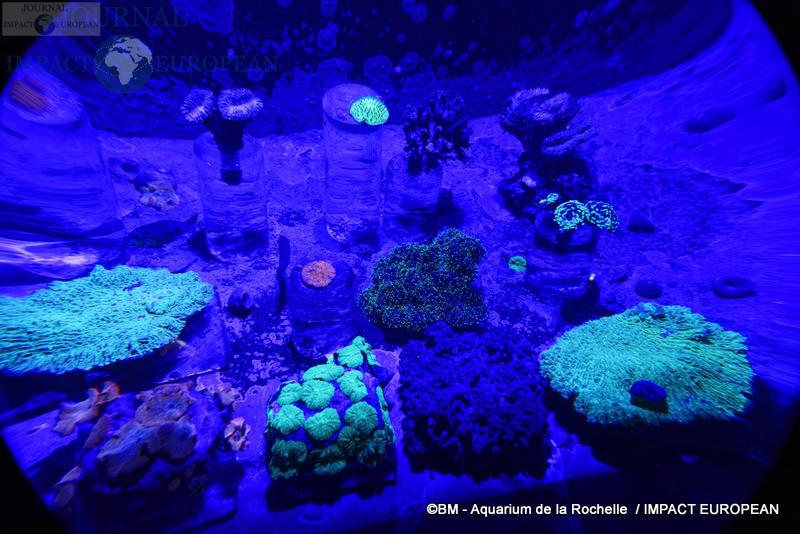 aquarium la rochelle 65