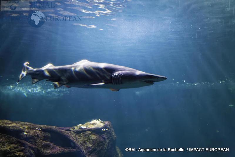 aquarium la rochelle 67