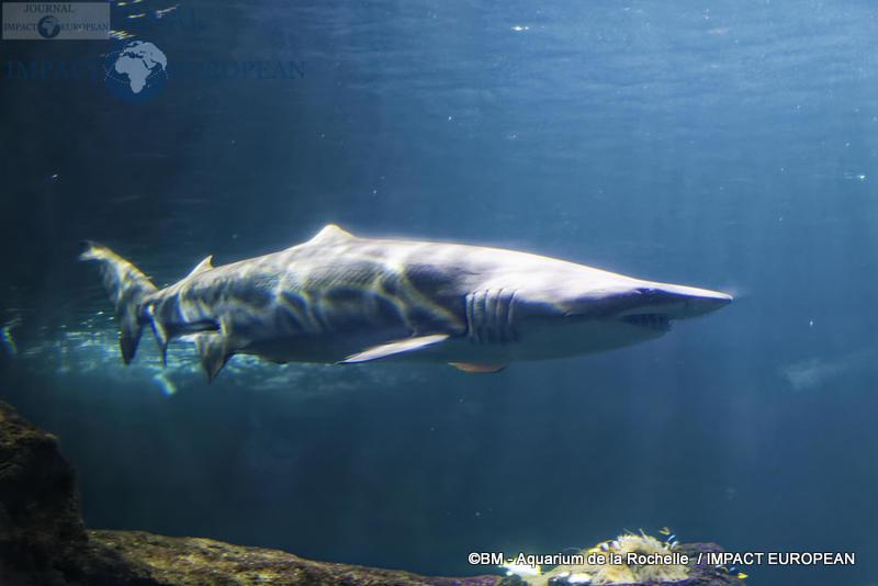 aquarium la rochelle 68