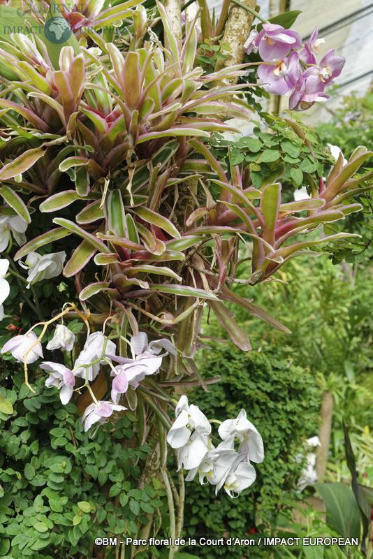 parc floral de la court d'aron 08