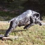 wildzwijn-150-cm-jachtgbeiden-in-spanje-en-in-hoenderloo