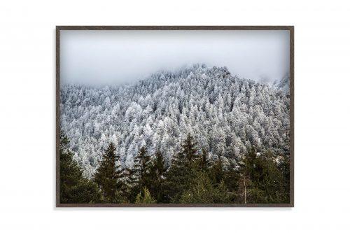 PinesFramed
