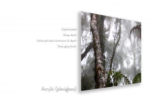 JungleAcrylic